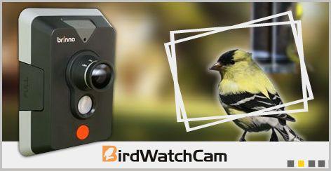 BirdCam