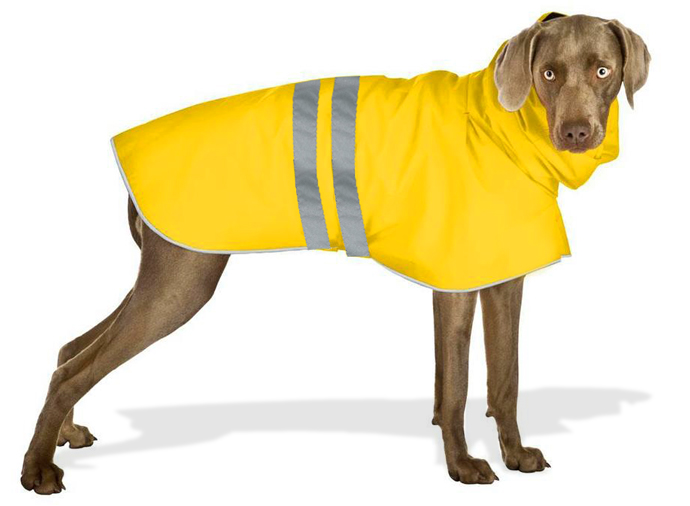 speechi-gilet-jaune